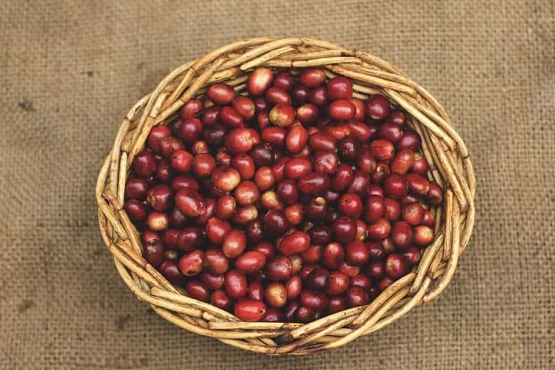 nutritivne vrijednosti kafe