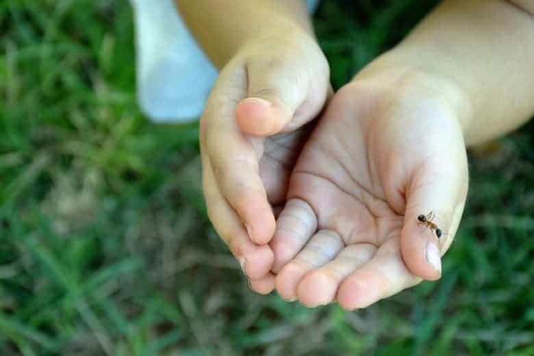 farma mrava