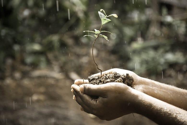 prirodne biljke