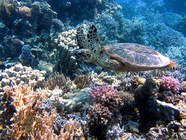 podvodni slobodni ribolov