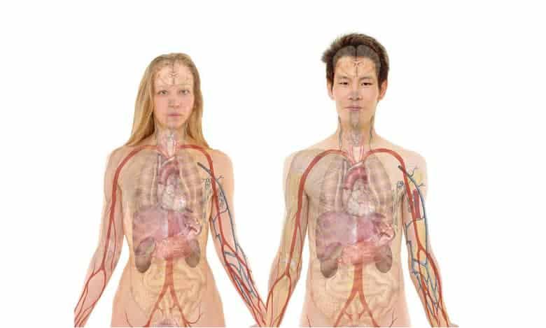 zanimljivosti o ljudskom tijelu