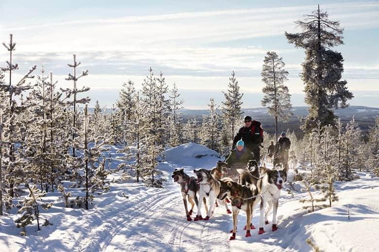 Sibirski haski historija
