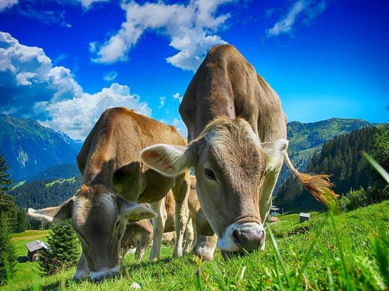 organski uzgojeno meso