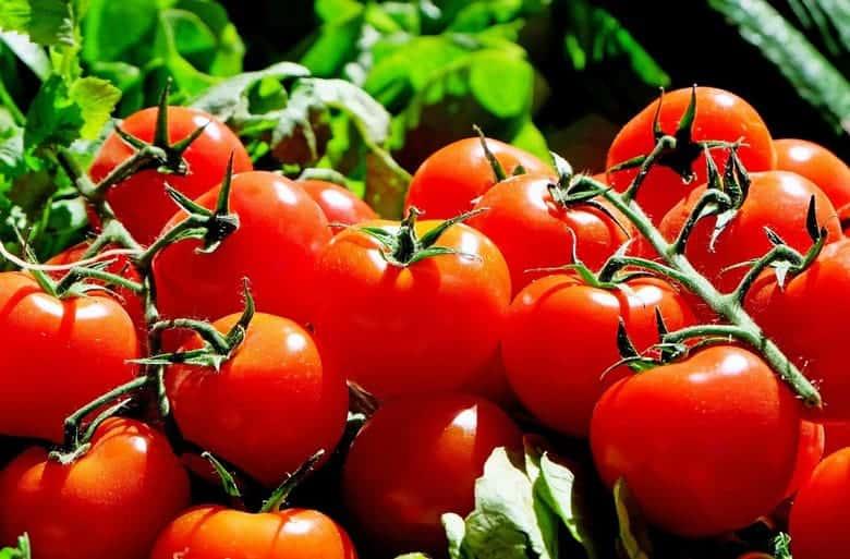 paradajz