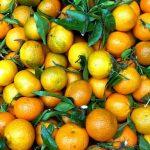 7 zdravstvenih prednosti mandarina